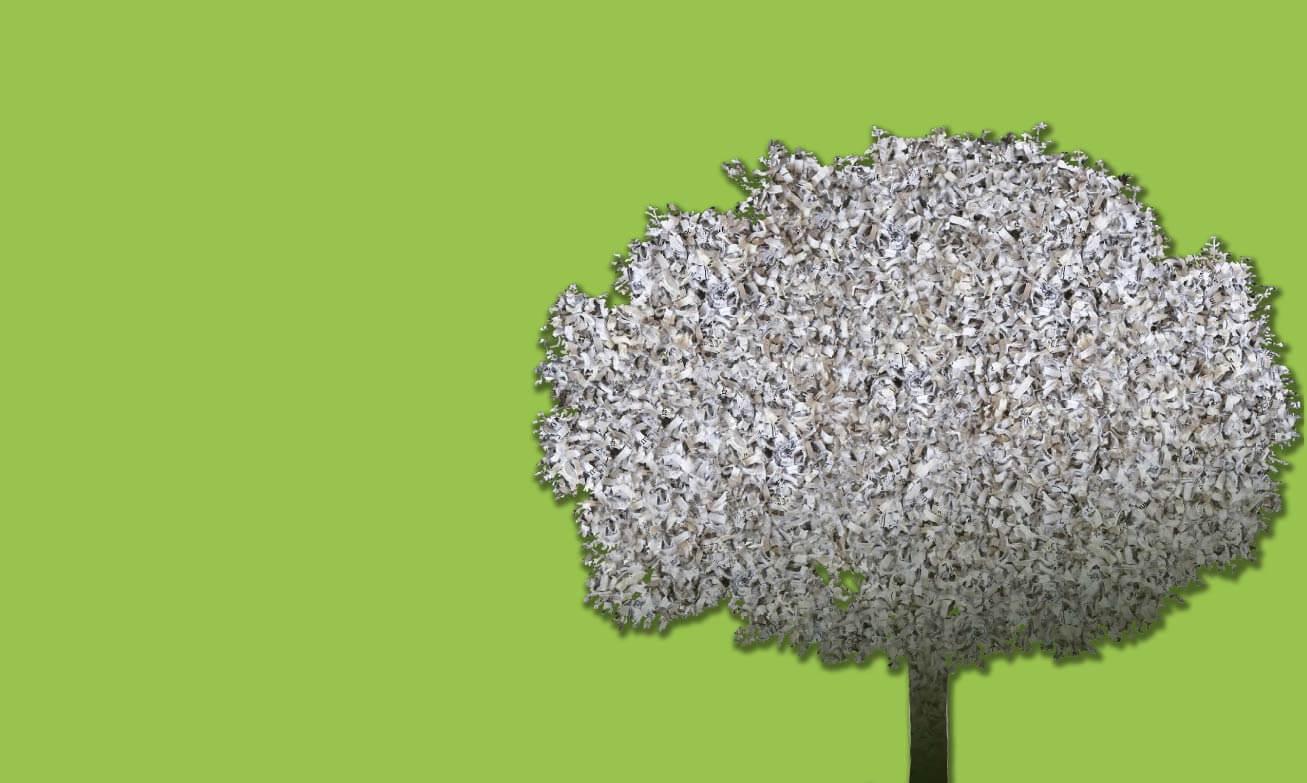 tree-bkgd